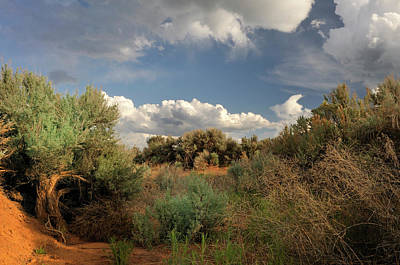 Photograph - Out On The Mesa 4 by Ron Cline