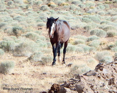 Photograph - Out On The Range by Bobbee Rickard