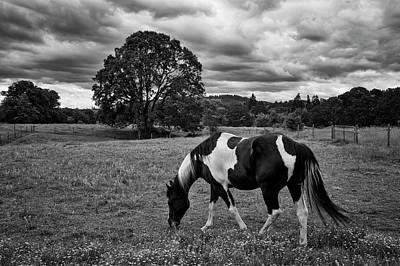 Photograph - Out To Pasture Bw by Steven Clark