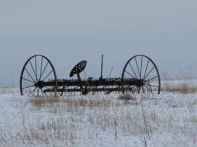 Photograph - Out To Pasture by David Barker
