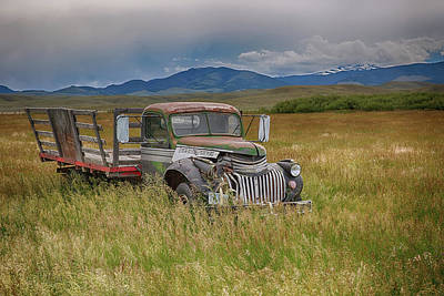 Photograph - Out To Pasture by Eilish Palmer