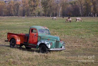 Photograph - Out To Pasture by Idaho Scenic Images Linda Lantzy