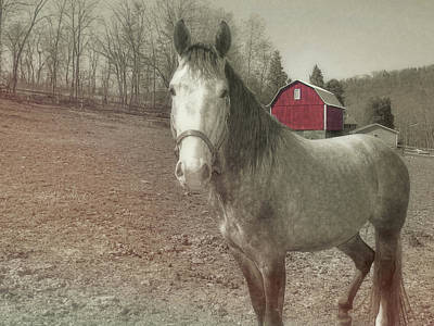 Out To Pasture Art Print by JAMART Photography