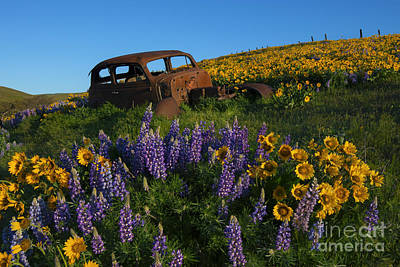 Rusted Cars Photograph - Out To Pasture by Mike Dawson