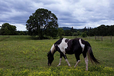 Photograph - Out To Pasture by Steven Clark