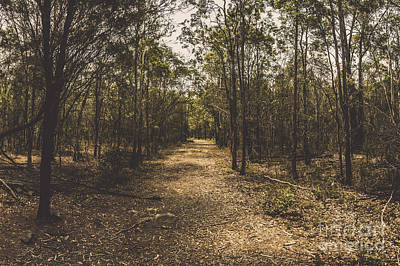 Scenic Woodlands Photograph - Outback Queensland Bush Walking Track by Jorgo Photography - Wall Art Gallery