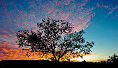 Photograph - Outback Sunset Pano by Ray Warren