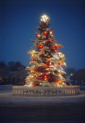 Photograph - Outdoor Christmas Tree by Utah Images
