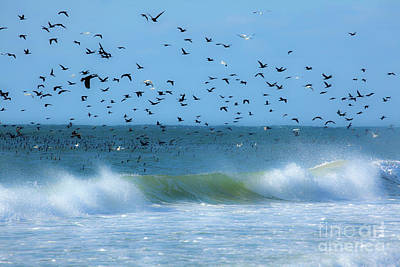 Photograph - Outer Banks Birds Over Crashing Waves by Dan Carmichael
