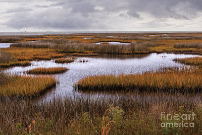 Photograph - Outer Banks Cedar Island Swamp Grass by Dan Carmichael