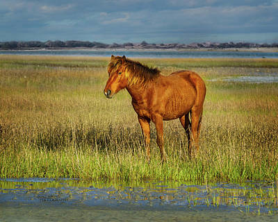 Photograph - Outer Banks Horse by Jill Monroe