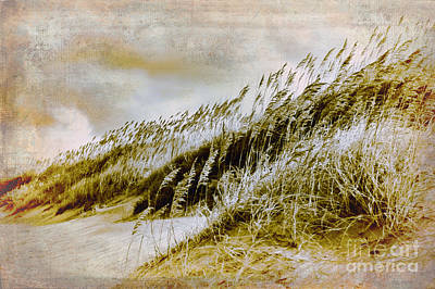 Photograph - Outer Banks Memories 4 by Dan Carmichael