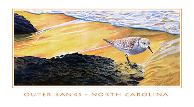 Mixed Media - Outer Banks Sanderling by Bob Nolin