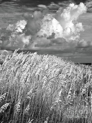 Outer Banks - Sea Oats Swaying In A Storm Bw Art Print by Dan Carmichael
