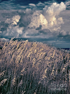 Outer Banks - Sea Oats Swaying In A Storm Fx Art Print by Dan Carmichael