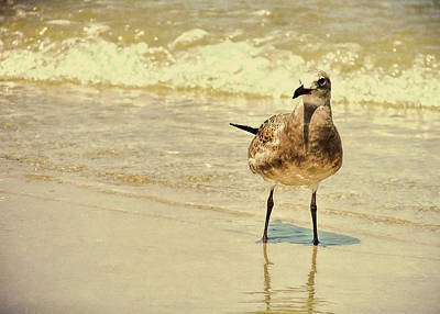 Photograph - Outerbanks Gull by JAMART Photography
