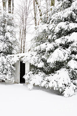 Outhouse In Pines Art Print by Thomas R Fletcher