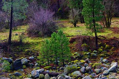 Photograph - Outside Yosemite Park 4 by Phyllis Spoor