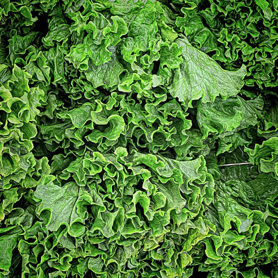 Photograph - Lovely Lettuce by Lewis Mann