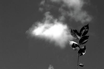Photograph - Over Here Bw by Mary Bedy
