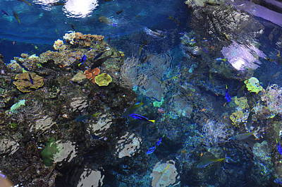 Photograph - Over Look Of The Reef  by Puzzles Shum