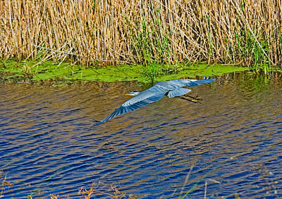 Photograph - Over The Bayou by Robert Brown