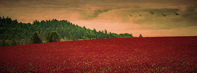 Crimson Clover Photograph - Over The Clover by Don Schwartz