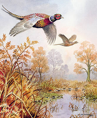 Pheasant Wall Art - Painting - Over The Fen by Carl Donner