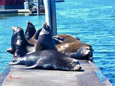 Photograph - Over The Hill Sea Lions by Sadie Reneau