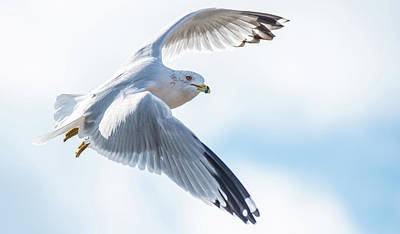 Photograph - Over The Shoulder Seagull by Jeff at JSJ Photography