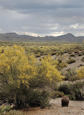 Apache Creek Photograph - Overcast Desert by Gordon Beck