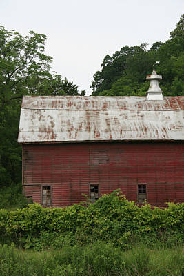 Photograph - Overgrown Barn by Dylan Punke