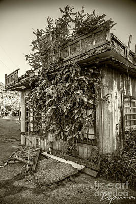 Photograph - Overgrown by Greg Kopriva