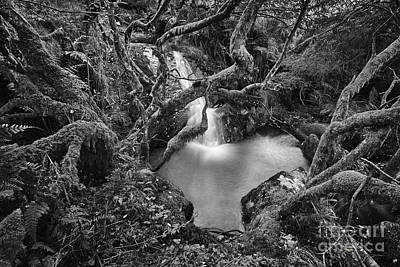 Waterfalls And Trees Landscape Photograph - Overgrown by Rod McLean
