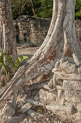Digital Art - Overgrown Roots At Coba by Carol Ailles