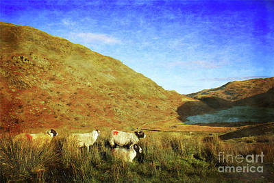 Photograph - Overlooking Haweswater by Linsey Williams