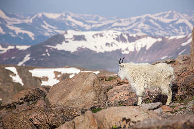 Photograph - Overlooking His Kingdom by Kari Andresen