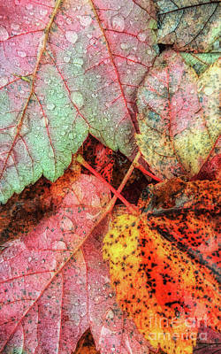 Photograph - Overnight Rain Leaves by Todd Breitling