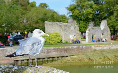 Herring Gull Photograph - Overwatch by Geoff Smith