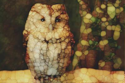 Owl 5 Art Print by Jack Zulli