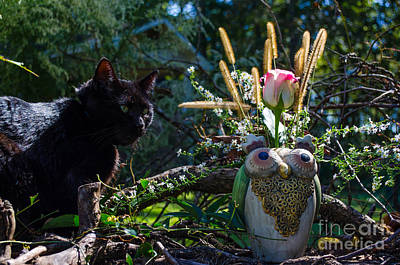 Photograph - Owl And Cat by Donna Brown