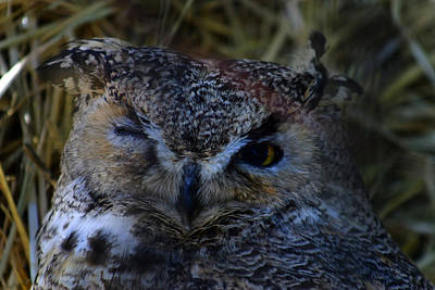 Photograph - Owl by Anthony Jones