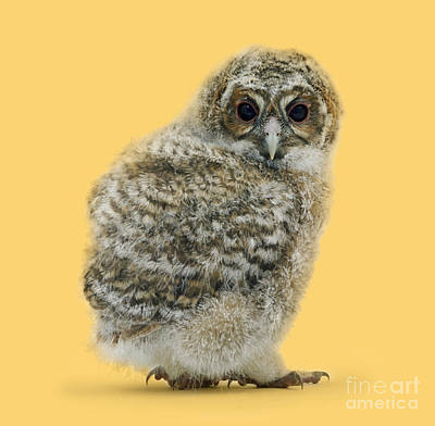 Photograph - Owl Be Back by Warren Photographic