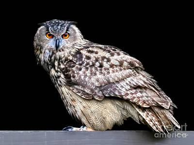 Gunmetal Photograph - Owl Be Seeing You by Jennie Breeze