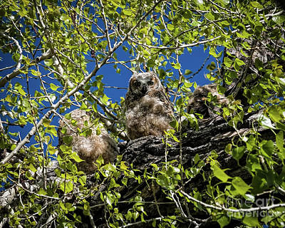 Photograph - Owl Be With You In A Moment by Jon Burch Photography