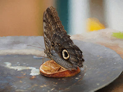 Photograph - Owl Butterfly, Caligo Memnon by Paul Gulliver