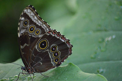 Owl Butterfly Art Print by Linda Geiger