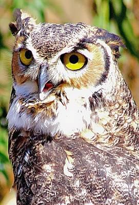 Photograph - Owl by Carol Tsiatsios
