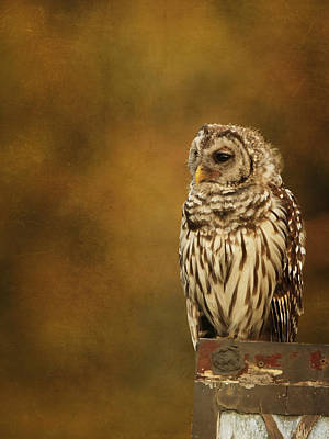 Photograph - Owl by Charles McKelroy