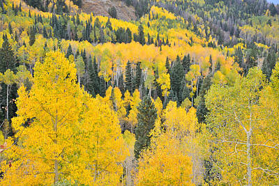 Photograph - Owl Creek Road Aspens by Ray Mathis